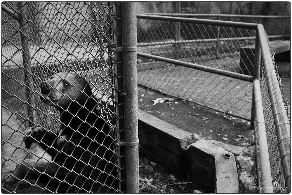 1992_bear_mayaguez_zoo_fp_1000