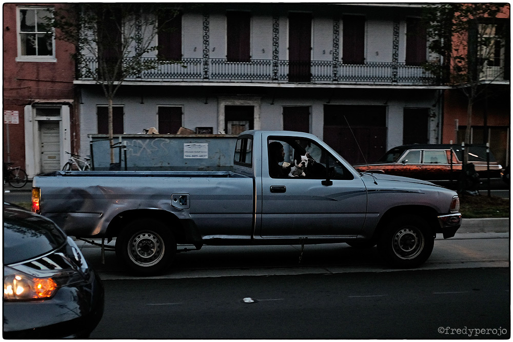 161112_new_orleans_car_dog_fp_1000